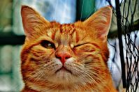 Katze (Symbolbild)
