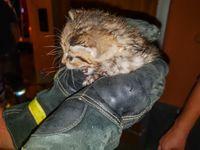 Rettung Babykatze Feuerwehr Forst Foto: Fabian Geier, Feuerwehr