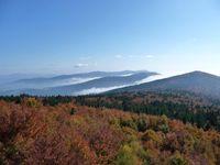 Nebel in den Tallagen, Sonnenschein und Wärme in den höheren Lagen bestimmen die WEtterlaage seit mehr als vier Wochen - wie hier auf dem Hirschenstein im Vorderen Bayerischen Wald Quelle: Foto: J. Krause, LWF (idw)