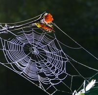 Spinnennetz: Forscher nutzen Eigenschaften. Bild: pixelio.de/Susanne Richter