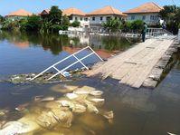 Überschwemmte Brücke