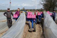 Für die Spargelernte sind Landwirte in Deutschland auf ausländische Saisonarbeitskräfte angewiesen.  Bild: ZDF Fotograf: ZDF/André Krüger