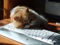 Übermüdung am PC: treibt Nutzer zu Facebook. Bild: Stefan Zdzialek, flickr.com