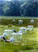 Langzeitexperiment an der Atlantikküste des US-Bundesstaates Maryland des Smithsonian Environmental Research Center zu den Auswirkungen des Klimawandels auf Pflanzengemeinschaften. Quelle: Foto: Dr. Bert G. Drake / Smithsonian Environmental Research Center (SERC) (idw)