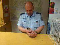 Ein Bundespolizist legt ein Küken behutsam in den Käfig. Bild: Bundespolizei