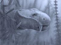 Kopf des Dicynodon lacerticeps