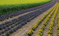 Die Zukunft der Landwirtschaft? Entweder mit der Natur - und leben - oder gegen die Natur und sterben (Symbolbild)