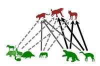 Bildliche Darstellung des Beutespektrums (grün) der untersuchten Raubtiere (rot) Quelle: Abbildung: Bocherens/Universität Tübingen (idw)
