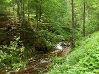 Naturwald (Symbolbild)