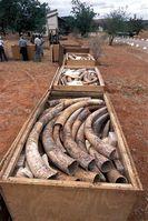 Bild: IFAW - Internationaler Tierschutz-Fonds