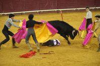 Kinder und Stierkampfveranstaltungen. Bild: FONDATION FRANZ WEBER