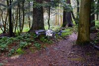 Drohnen suchen selbständig auf Waldwegen nach Vermissten. Quelle: UZH; USI; SUPSI (idw)