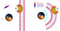 Ein Mikroroboter wird mit einem Magnetfeld zu einer Zelle gesteuert (l.). Durch eine Veränderung des Magnetfelds - dargestellt als Kompassnadel - erzeugt der Roboter ein elektrisches Feld. Quelle: Grafik: ETH Zürich / Salvador Pané (idw)