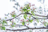 Aprilwetter Bild: WetterOnline Meteorologische Dienstleistungen GmbH Fotograf: WetterOnline