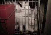 VIER PFOTEN fordert gesetzliches Käfigverbot für Kaninchen. Bild: Vier Pfoten