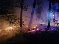 Rund 150 Quadratmeter Waldfläche waren in Brand geraten Bild: Feuerwehr