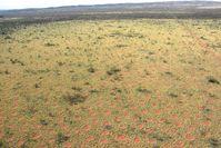 Aus der Vogelperspektive wird ersichtlich, dass sich die Feenkreise homogen über die Landschaft vert Quelle: Kevin Sanders (idw)