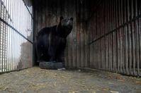 Rosa in ihrem 4x4 Meter großem Gefängnis. Bild: VIER PFOTEN