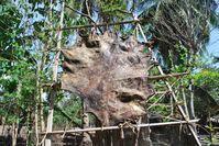 Zur Trocknung aufgehängte Tierhaut in Osttimor