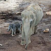 Elefanten (Symbolbild)