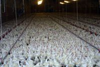 Bildquelle: Bundesverband Menschen für Tierrechte