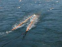 Die Fischgemeinschaft in der Nordsee scheint sich aufgrund des restriktiveren Fischereimanagements zu erholen. Dennoch werden viele Bestände immer noch zu stark befischt. Quelle: (Foto: Thünen-Institut) (idw)