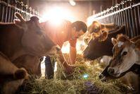 Über 1.300 Landwirte beliefern die Milchkooperative Dos Pinos in Costa Rica, das führende Molkereiunternehmen des Landes.  Bild: Dos Pinos Fotograf: Paul Aragon Leyton