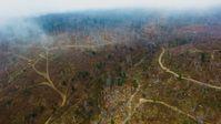In keinem anderen EU-Land ist noch so viel Urwald erhalten wie in Rumänien: Geschätzte zwei Drittel unserer letzten wilden Wälder finden sich in dem Karpatenland.