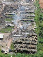 Illegale Holzentnahme in Brasilien Bild: Wilson Dias/Agência Brasil / de.wikipedia.org