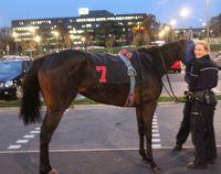 Das Foto zeigt eine Polizistin, die das Pferd zähmen konnte. (Foto: Polizei Rhein-Kreis Neuss)