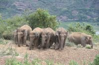 Ein am 21. Juni 2021 aufgenommenes Foto zeigt erwachsene asiatische Elefanten, die in Reihen stehen und die Kleinen zu beschatten.  Bild: Xinhua Silk Road Information Service Fotograf: Cui Yonghong