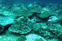 Korallenriff auf der Westseite einer Insel in der Andamanensee. Riffe in dieser Lage sind Internen Wellen und durch den Monsun ausgelösten Strömungen ausgesetzt. Quelle: Foto: Marlene Wall, GEOMAR (idw)