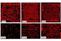 So breiten sich die Zellen in der 3D-Struktur aus.