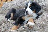 Bild: Hundefreund  / pixelio.de