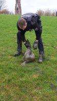 Der gerettete Seehund. Bild: Polizei