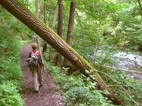 Klassisches Wanderterrain: die Täler und Höhen der Mittelgebirge