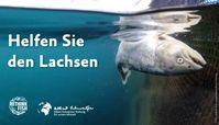 Bild: Compassion in World Farming Fotograf: Rethink Fish
