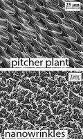Oberfläche der Kannenpflanze (oben) und der Beschichtung. Bild: sydney.edu.au