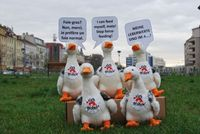 Plüschgänse protestieren gegen Stopfmast. Bild:  (c) VIER PFOTEN
