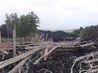 Das Basaltgestein des im Jahr 2002/2003 ausgebrochenen Ätnas bedeckte Teile des Waldes unter sich. Quelle: Bild: Ruedi Seiler, WSL (idw)