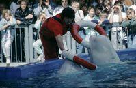 Duisburger Zoo: Beluga-Dressur (1980er Jahre)