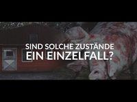 """Bild: Screenshot Video: """"Zum 7. Mal: Erneut Schweinequal aufgedeckt"""" (https://youtu.be/83yludB8Qu4) / Eigenes Werk"""