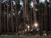 Natürliche Wälder fehlen in Europa. Stattdessen gibt es seit Jahrzenten hochempfindliche Industriewälder (Symbolbild)