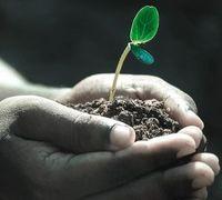Pflanze: cleveres Energiemanagement schützt.