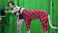 Motion Capture: Hunde lassen sich günstig digital vermessen.