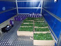 Neue Setzlinge von Hanfpflanzen, Dünger usw. standen schon für die neue Zucht bereit. Bild: Polizei
