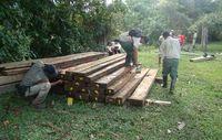 Illegal geschlagenes Holz, das bei der SERNANP-Razzia im Manú-Nationalpark beschlagnahmt wurde. Bild: SERNANP/Survival