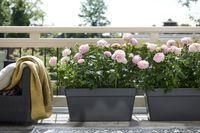 Balkonpflanzen eignen sich optimal, um eine heimische Ruhe-Oase zu schaffen. Bild: Pflanzenfreude.de Fotograf: Blumenbüro Holland