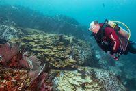 """Fürst Albert II. von Monaco schaut sich beim Tauchen den Zustand der Unterwasserwelt an. Bild: """"obs/ZDF/Olivier Borde"""""""