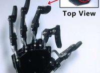 Finger mit Spezialhaut: Das ermöglicht hohe Sensibilität.